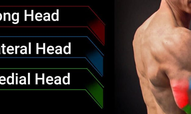 7 Exercise for Triceps Long Head – Build Bigger & More Defined Arms